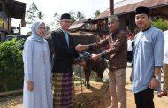 Walikota Serahkan 4 Ekor Sapi Qurban